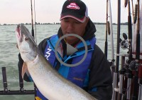 st clair musky fishing